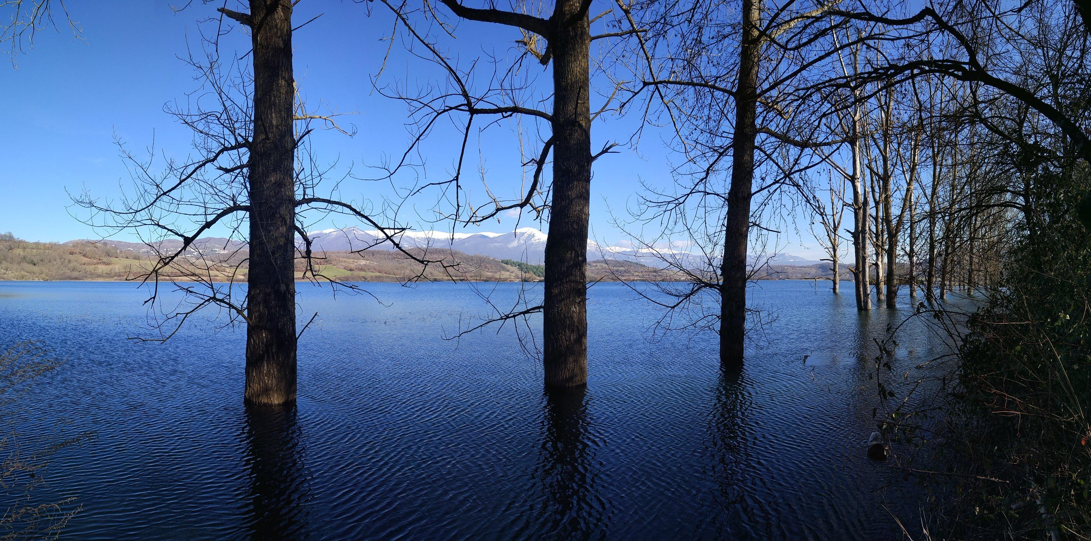Lago di Canterno, alberi