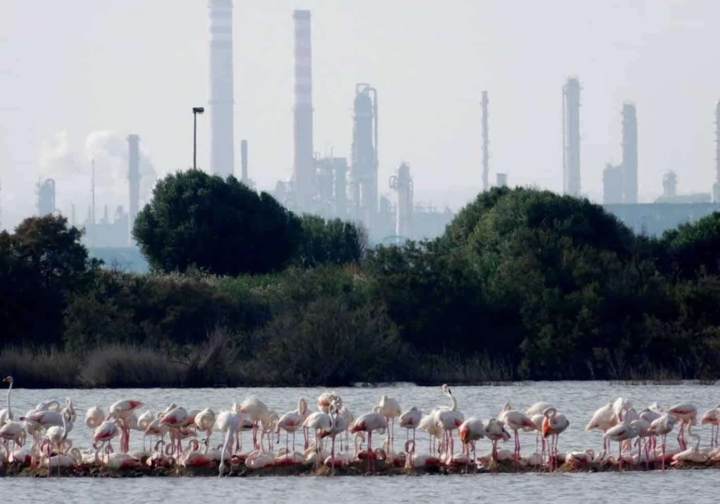 Saline di priolo con gruppo di fenicotteri rosa con vista delle industrie a Siracusa, Sicilia