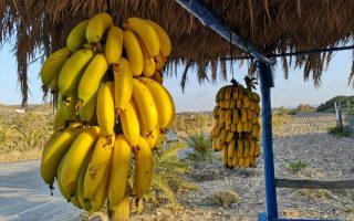 banane_creta