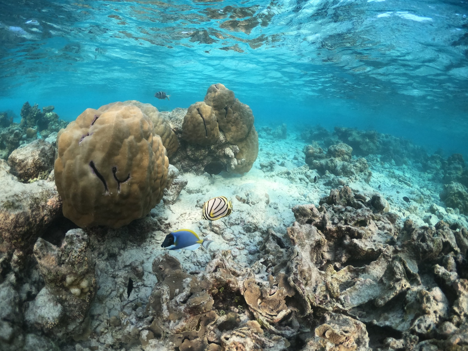 Kudafushi_fishs_paradise