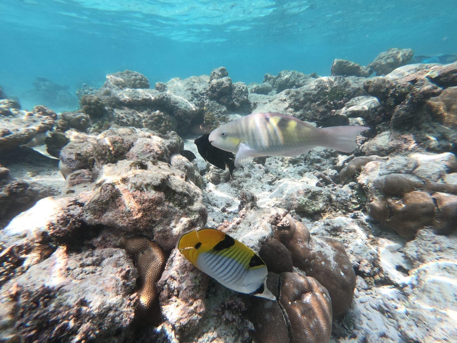 Kudafushi_fishs_scuba