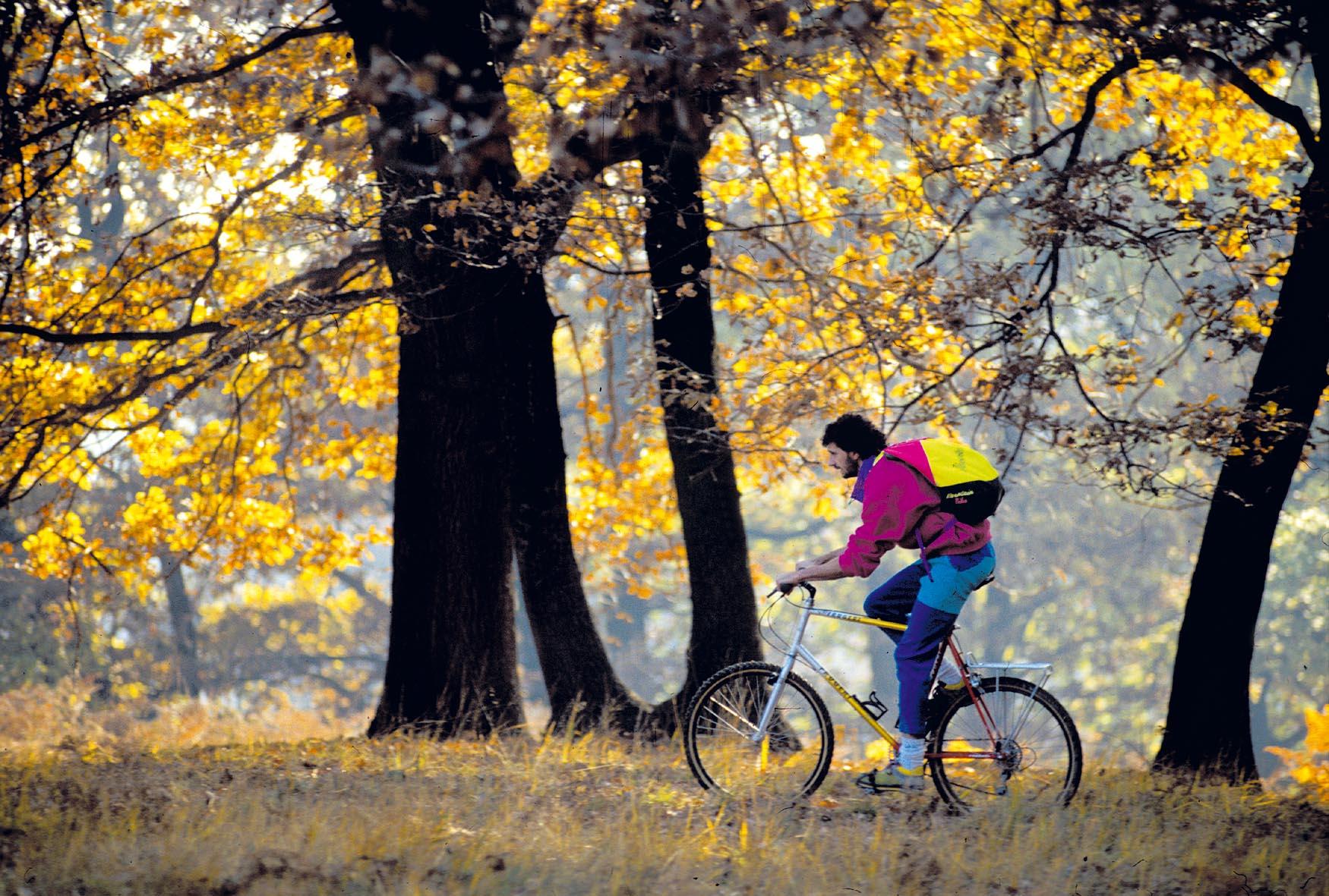 bicigletta sui sentieri della baraggia in piemonte tra gli alberi dai colori dorati