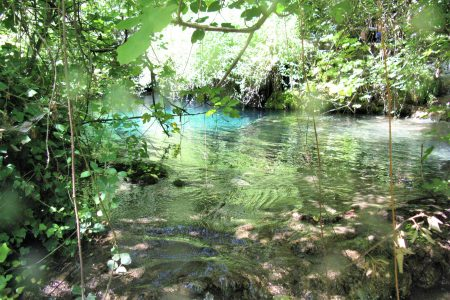 torrente limpido tra la vegetazione al Calcinara