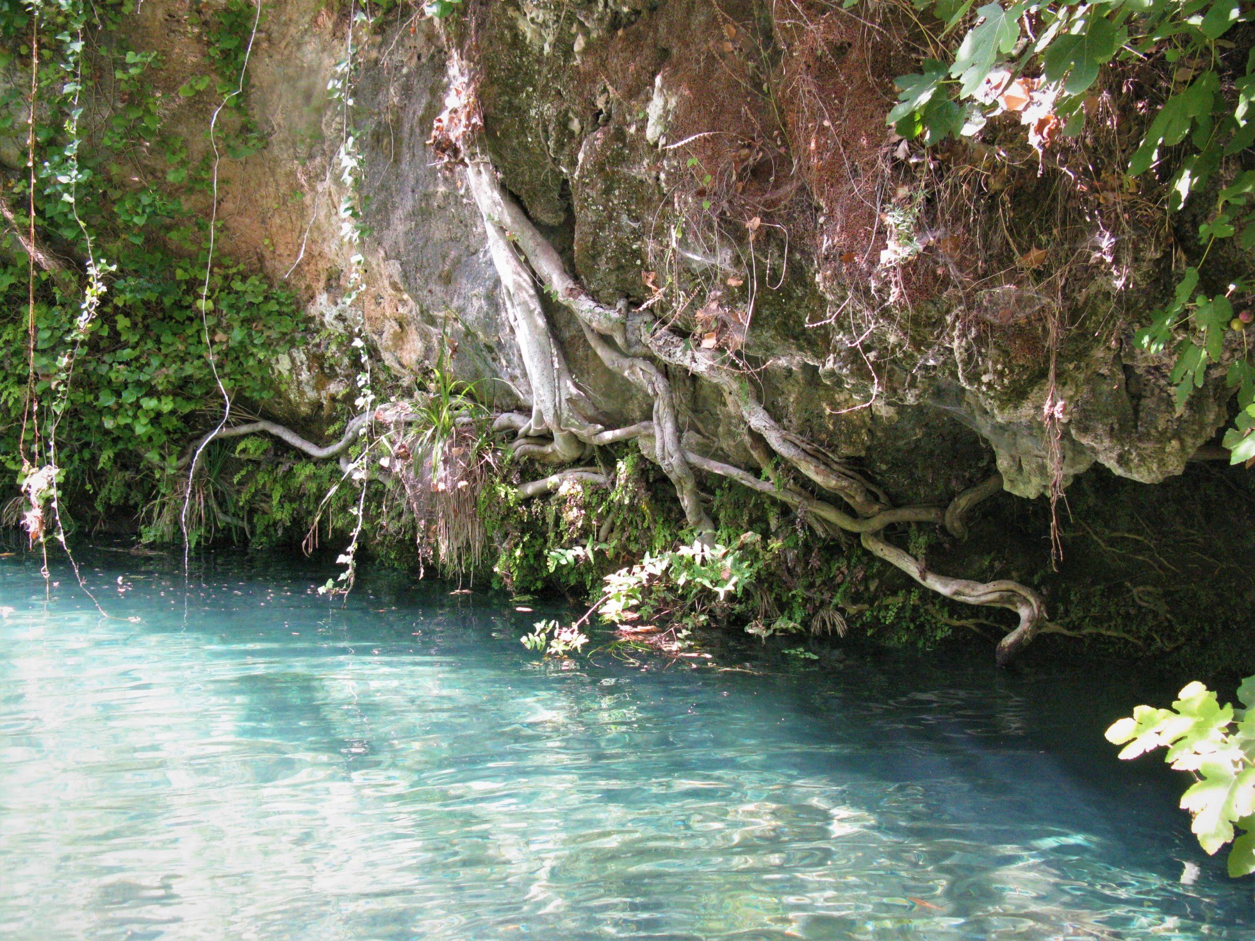 radici che si arrampicano su una parete rocciosa e finiscono dentro il torrente Calcinara