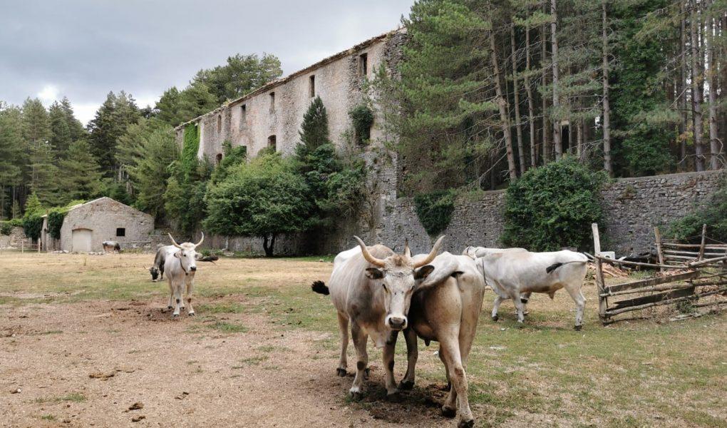 Muli Ferdinandea archeologia Calabria