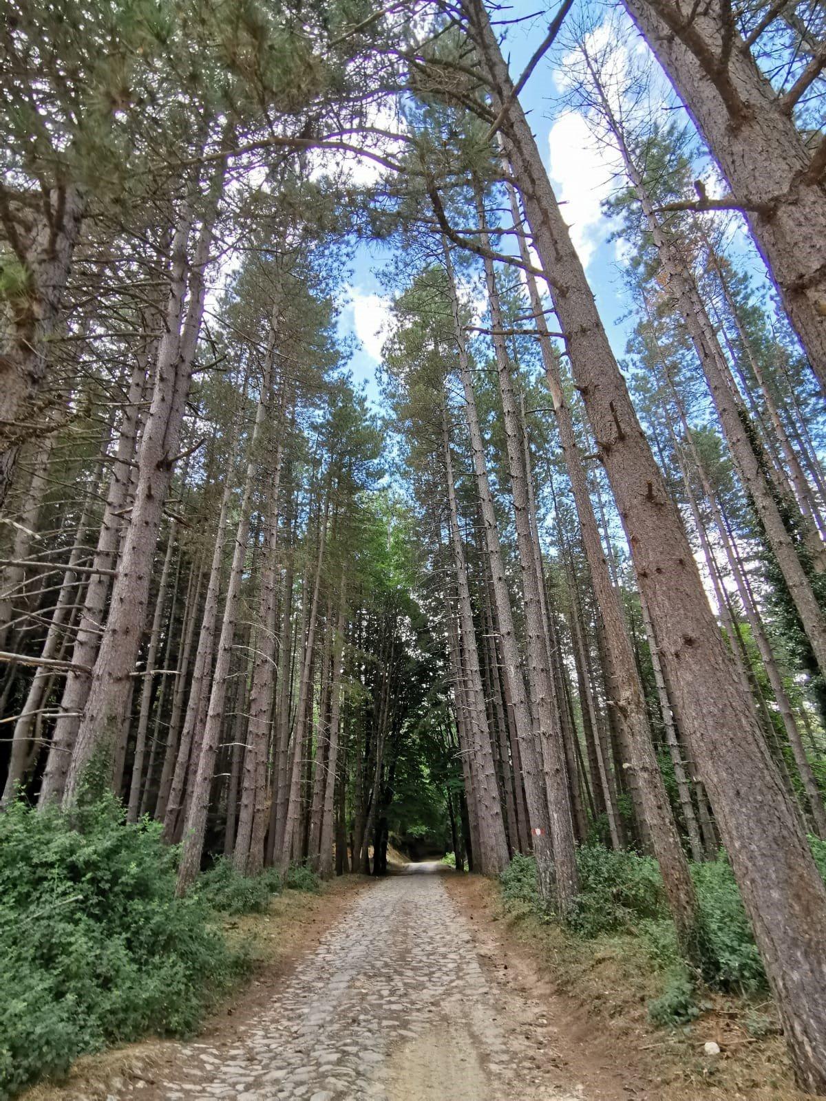 sentiero dei boschi di Stilo in Calabria