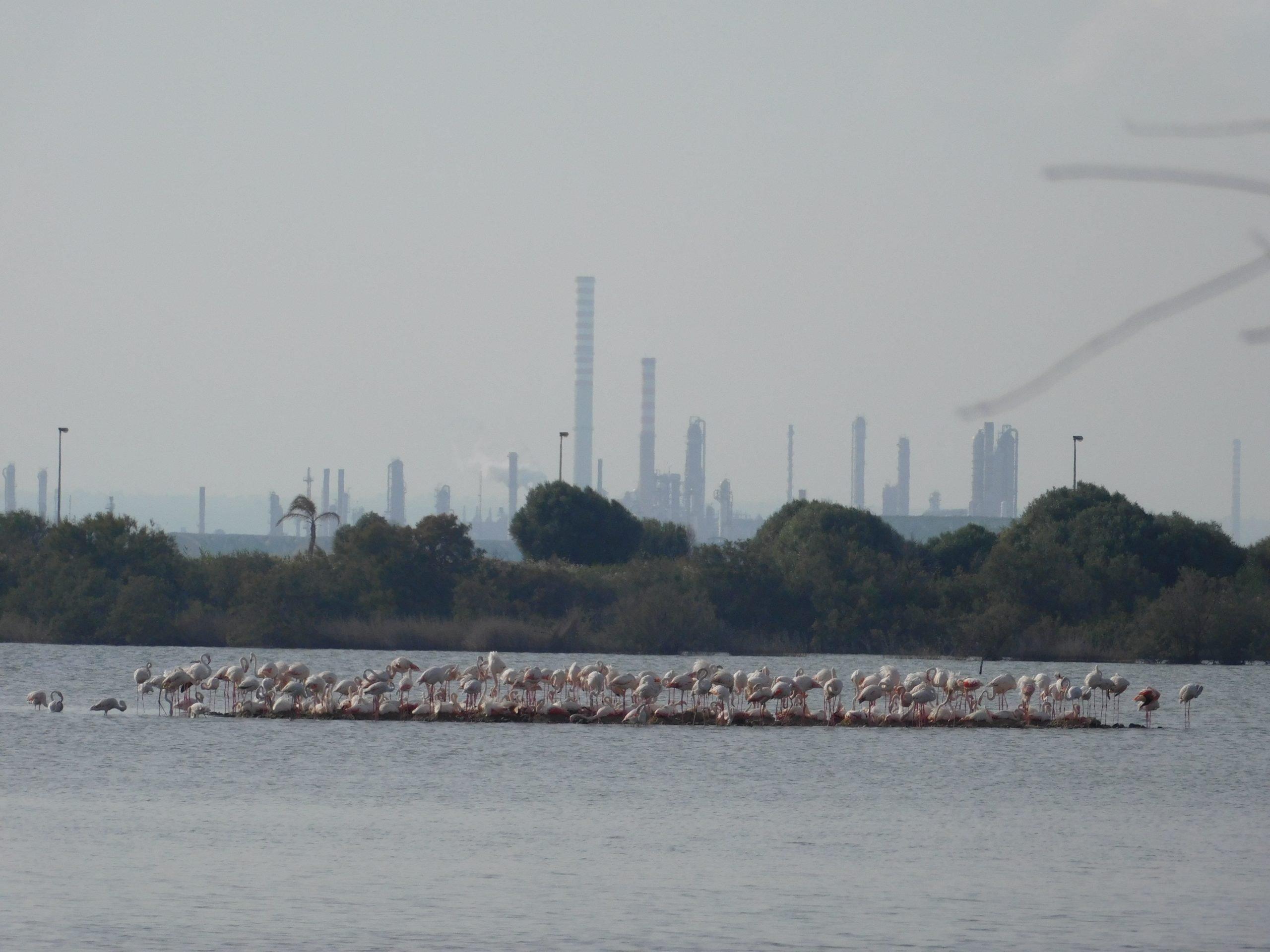fenicotteri rosa e ciminiere industriali